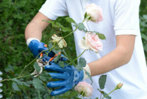 Gardening Services London Quality Property Care Ltd.